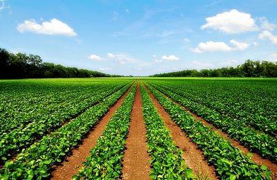 договор аренды земельного участка сельхозназначения